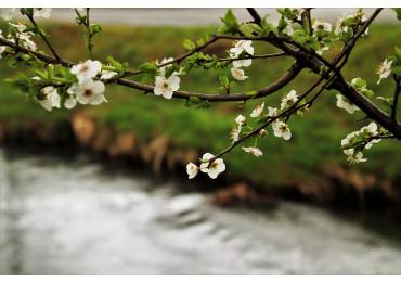 pripreme-za-proljece