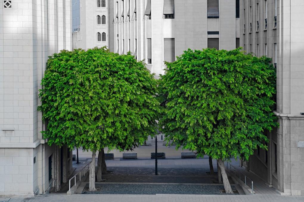Sjene drveća mogu ohladiti gradove za 5 °C