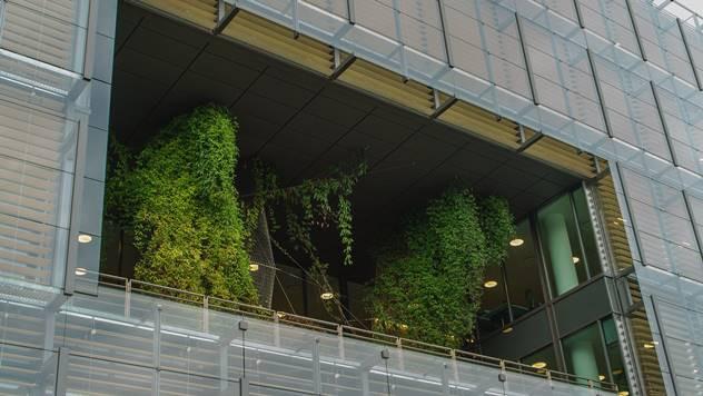 Gajenje povrća na balkonu – korist i zadovoljstvo